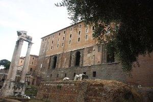 Palazzo del Senatore back