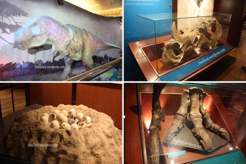 Natural History 3